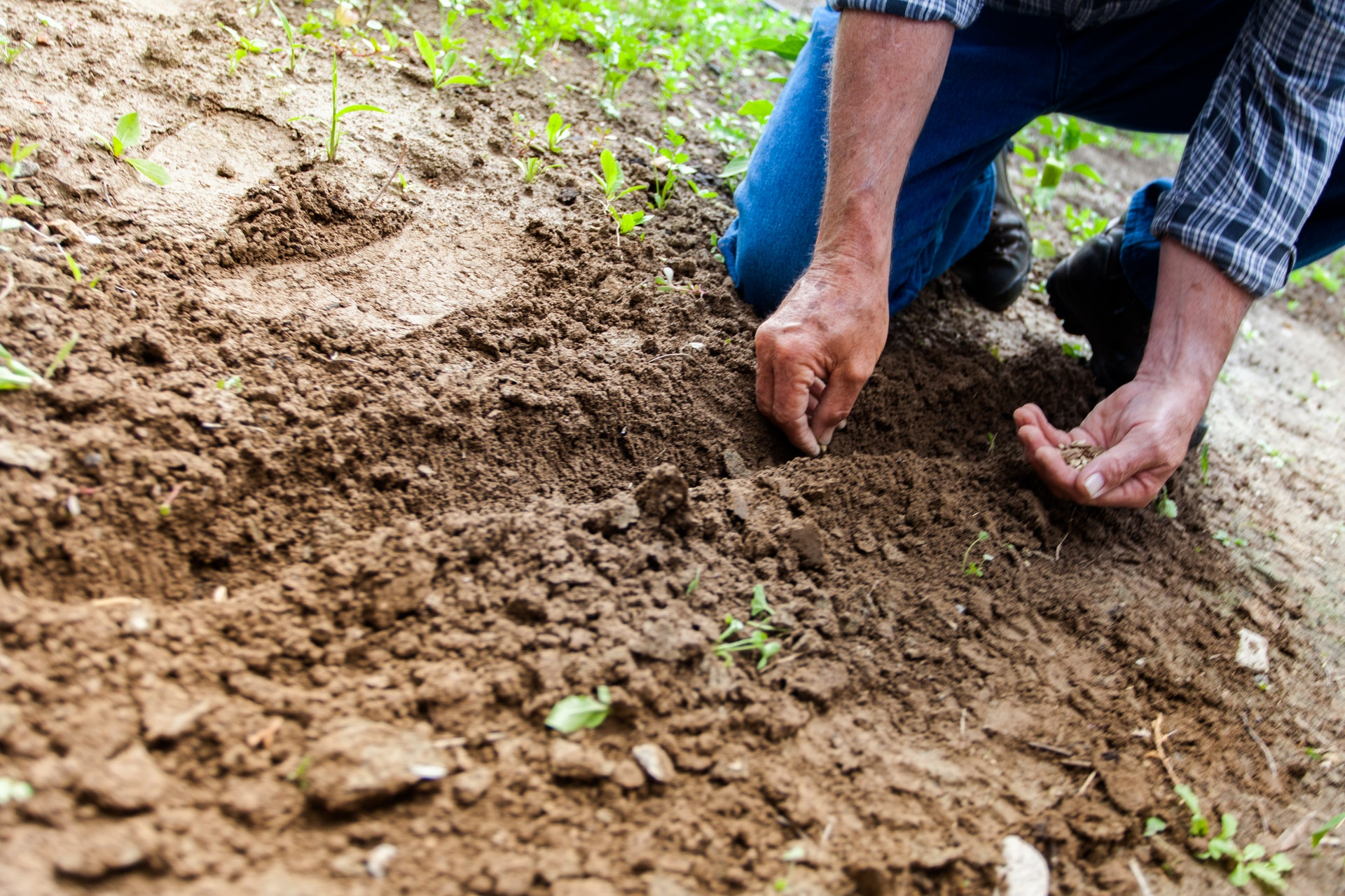 Sustainable Farming Methods and Practices